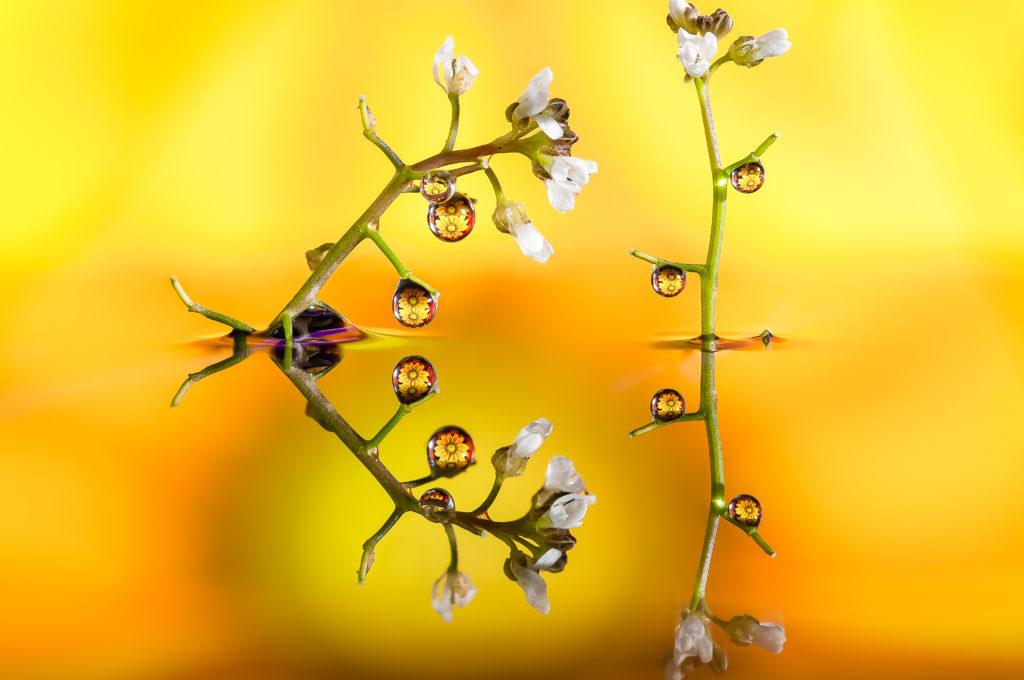 Drops & Flowers Gocce e Fiori Riflessi by Mario Nicorelli con Nikon D300s macro fotografia