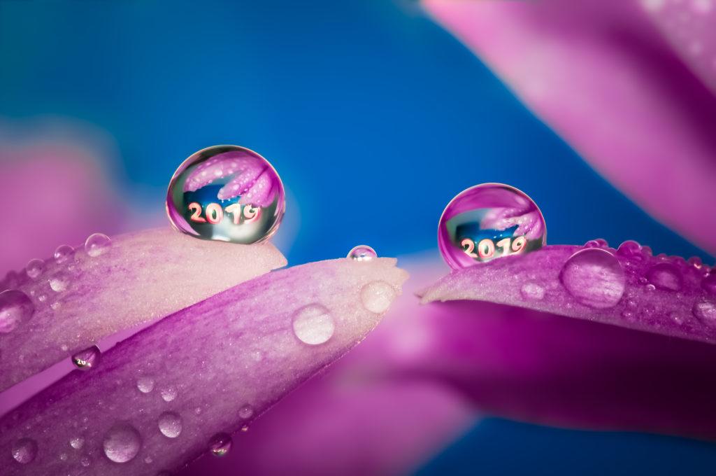 Drops FLOWERS Gocce e Riflessi by Mario JR Nicorelli con Nikon D300s Macro fotografia - Macro Photography - Macro Foto