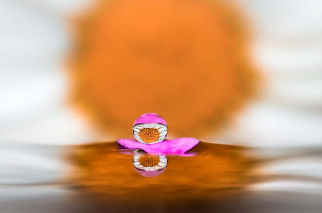 Drops e Flowers Gocce e Fiori Riflessi by Mario JR Nicorelli con Nikon D300s Macro fotografia - Macro Photography - Macro Foto Si tratta di una macro fotografia che ritrae delle gocce d'acqua che riflettono al loro interno il soggetto che sta alle loro spalle. It is a macro photograph that shows water drops that reflect the subject behind them.